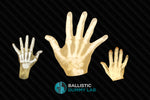 Ballistic Gel Hands