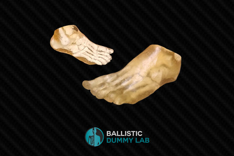 Ballistics Gel Foot