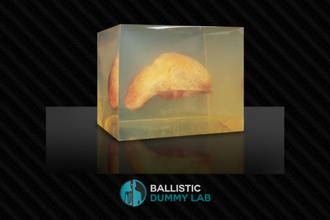 Ballistic Gel Organ Block