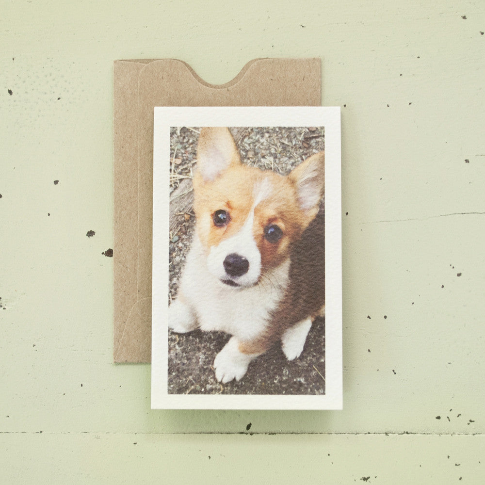 Corgi Enclosure Card