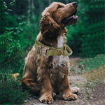 Load image into Gallery viewer, Adjustable Military Training Collar for Dogs