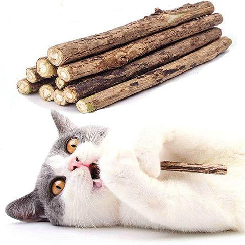 Cats & Kitten Silvervine Teeth Molar Chew Sticks Toys