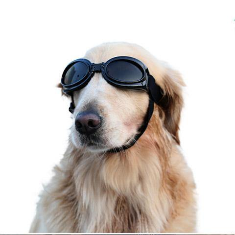 Dog Waterproof Windproof Goggles UV Protection