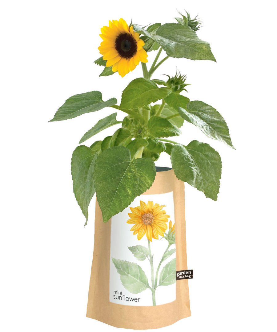 sunflower in a bag garden kids activities care package kids gifts greeting card