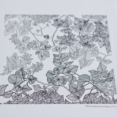 Print - Hiding Beneath a Canopy of Leaves
