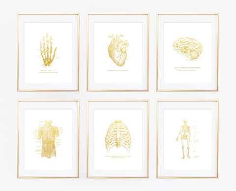 Matte Gold Anatomy Set of 6 Prints - Choose Size