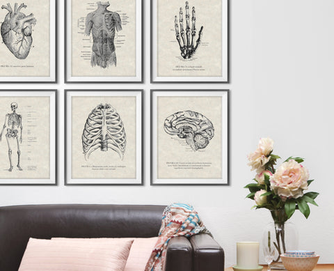 Vintage Anatomy Illustration Set of 6 Prints - Choose Size