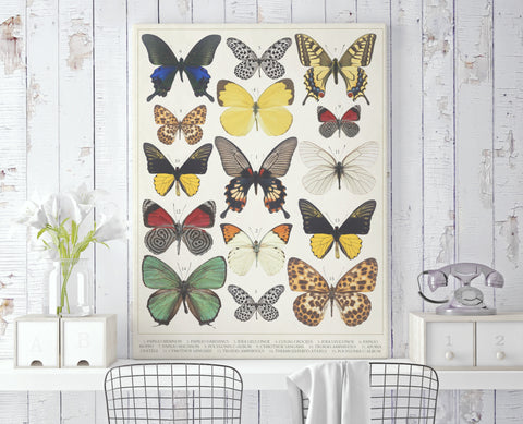 Butterfly Chart Canvas - Choose Size