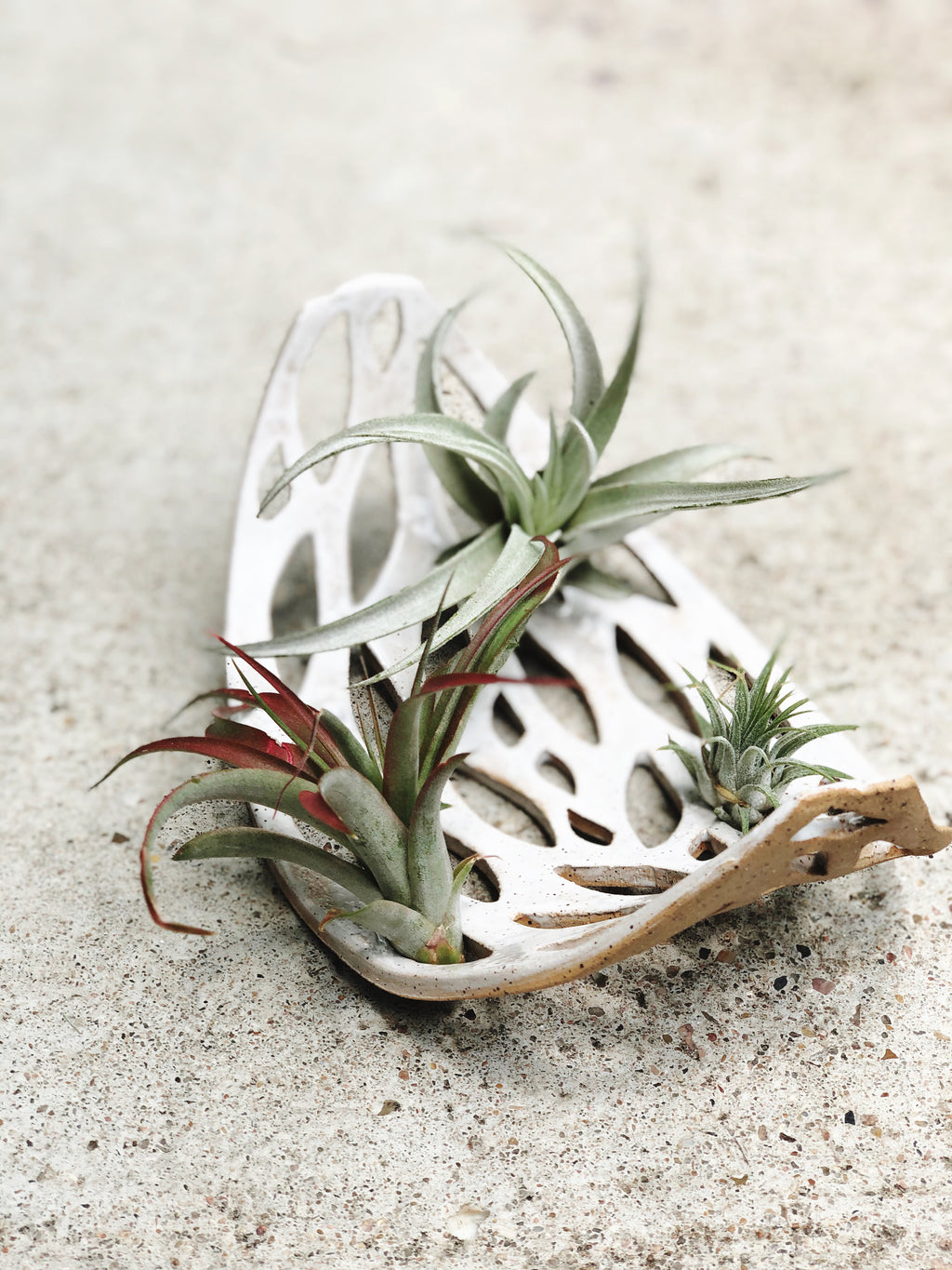 Speckled Stoneware Tillandsia Garden - Plants and Pots Shop