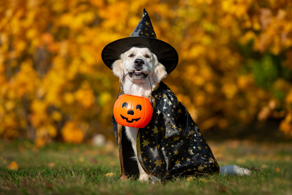 15 Adorable Halloween Costume Ideas for Dogs & Cats