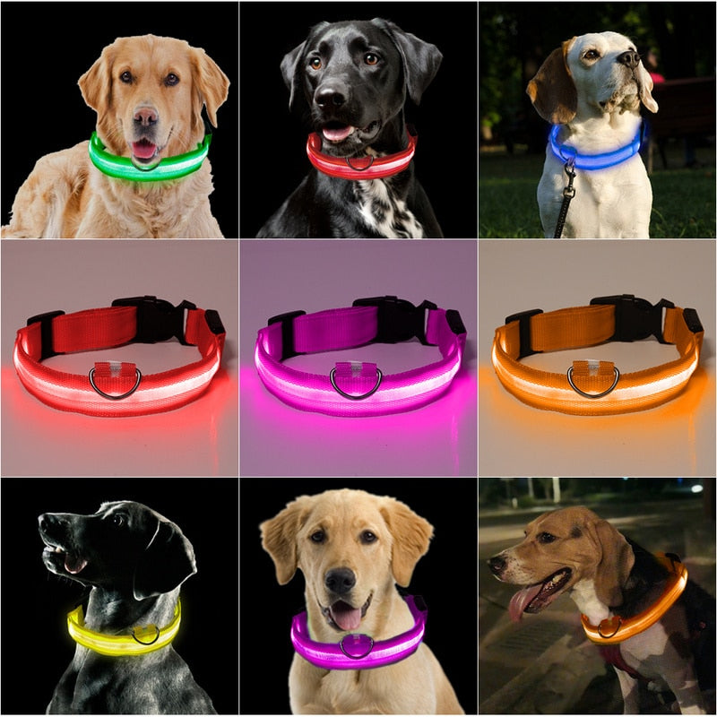 Creative Led Dog Collar Anti-Loss / Avoid Car Accidents Dog Collar Puppies Dog Collars LED Supplies Pet Products Without Battery