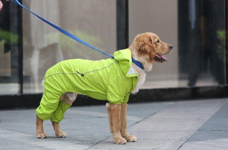 Medium and large dog waterproof big dog raincoat pet Golden Retriever four-foot raincoat