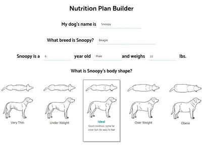 How Your Dog's Nutrition Plan is Developed