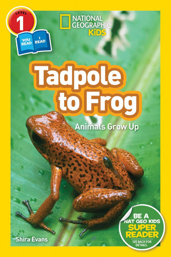 Tadpole to Frog National Geographic Kids (Level 1)