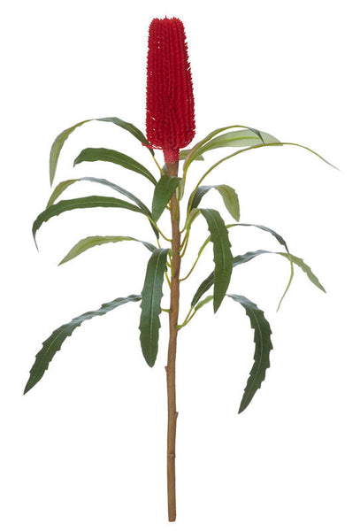 Banksia Thin Stem