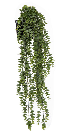 Silver Leaf Hanging - Garden Pot