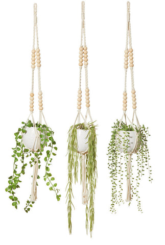 Hanging Succulent Mix - Choose Your Style
