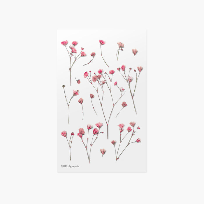 Appree | Pressed Gypsophila Flower Sticker Sheet | Script + Sea