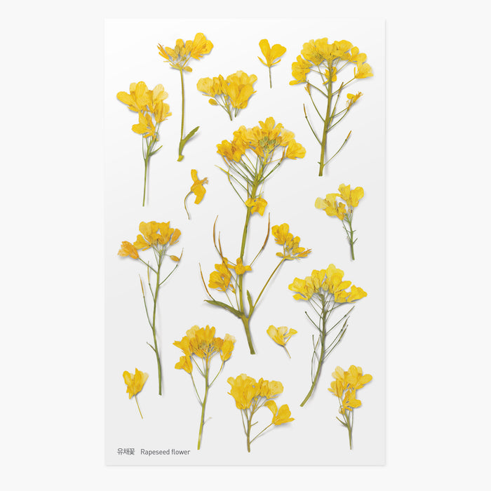 Appree Pressed Rapeseed Flower Sticker Sheet from Script + Sea features beautiful and bright yellow flowers with thin stems.