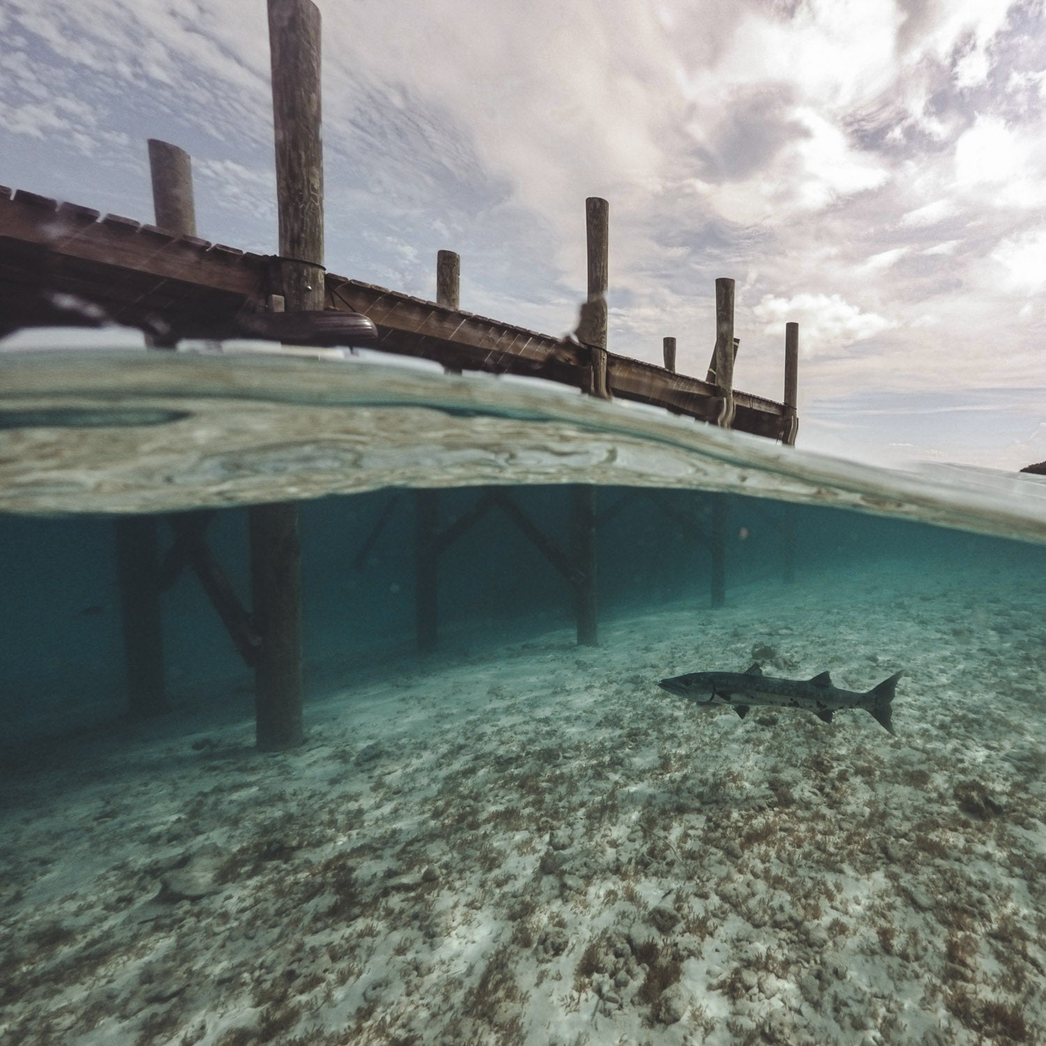 tropical underwater photography