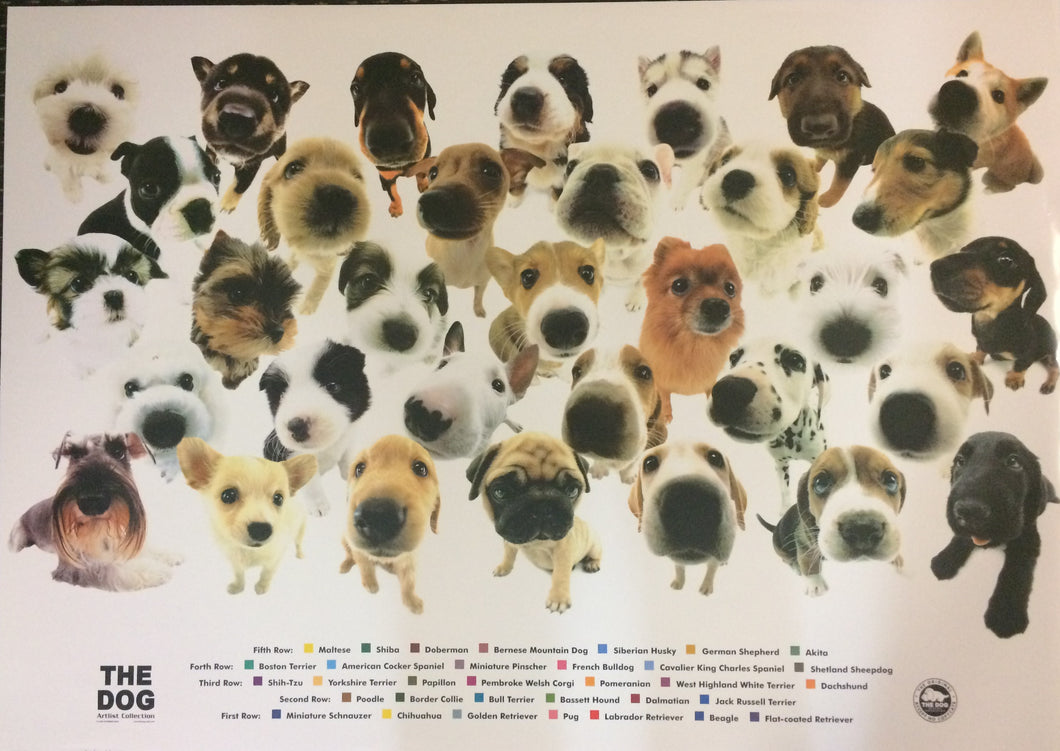 The Dogs' Artist Collection