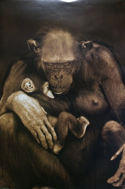 Chimpanzee - Motherhood