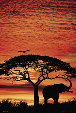 African Elephant - Sunset