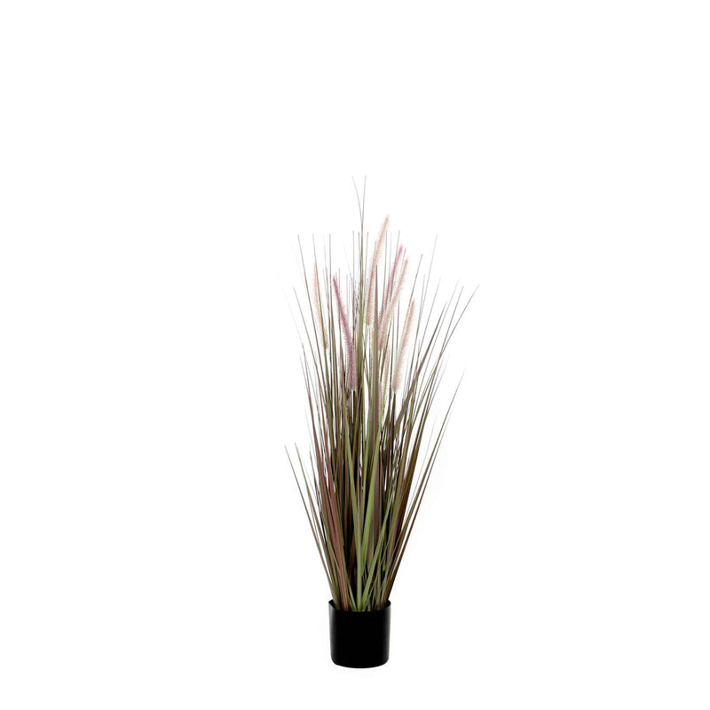 Mica Decorations dogtail gras paars in plastic pot dia in cm: 12,5 maat in cm: 90