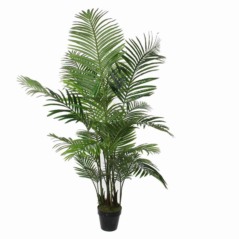Mica Decorations areca palm in pot maat in cm: 130 x 140