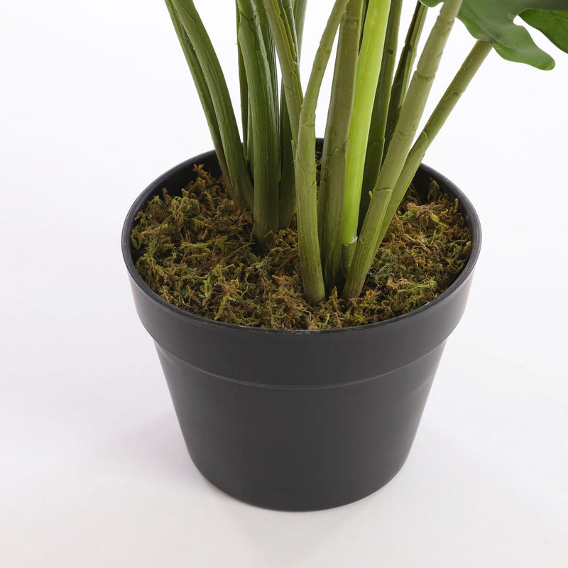 Mica Decorations philodendron in plastic pot maat in cm: 60 x 80