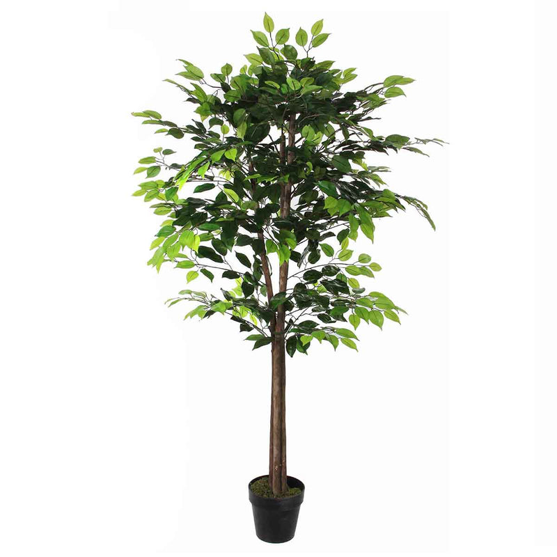 Mica Decorations ficus in pot maat in cm: 165 x 65