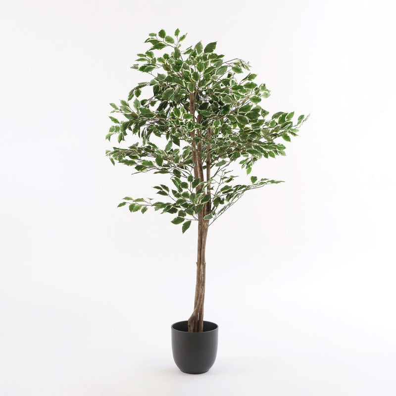 Mica Decorations ficus in pot bont maat in cm: 165 x 65