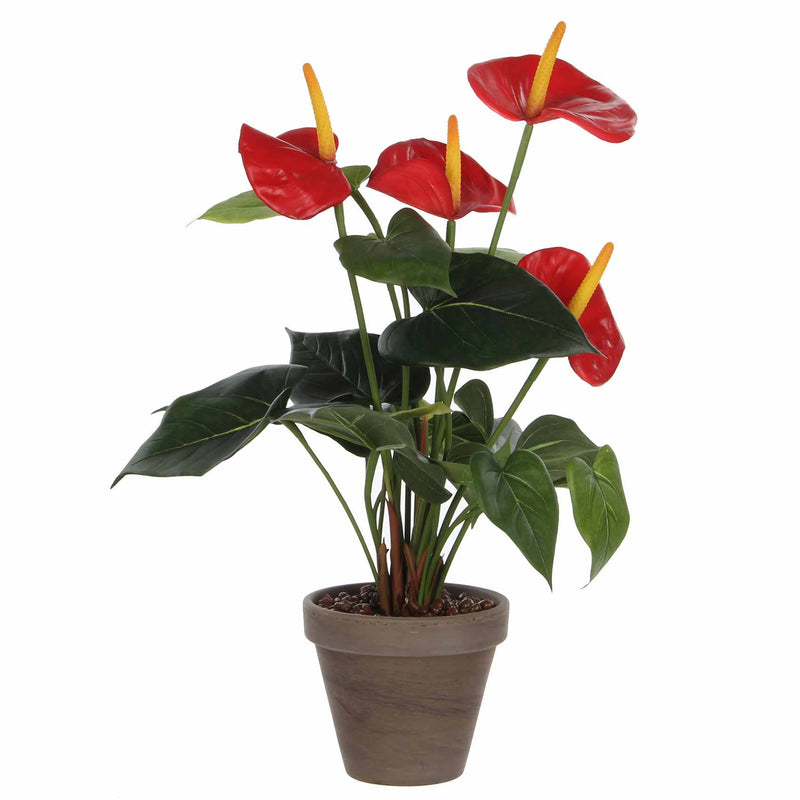 Mica flowers - anthurium maat in cm: 40 x 30 rood in pot