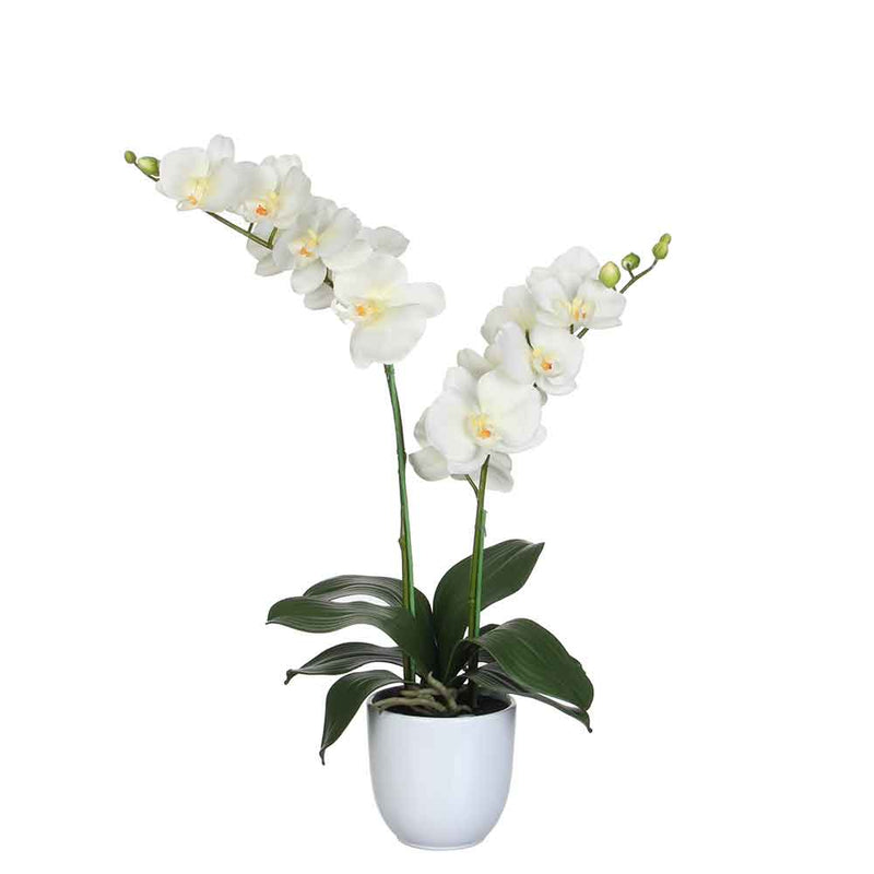 Mica Decorations phalaenopsis creme in pot tusca wit (dia 12) maat in cm: 45 x 28 x 50