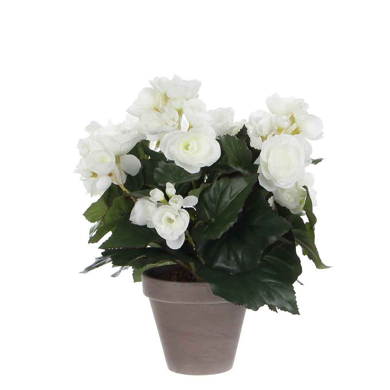 Mica Decorations begonia maat in cm: 30 x 25 wit