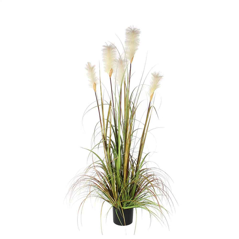 Mica Decorations pluimgras foxtail in plastic pot maat in cm: 150