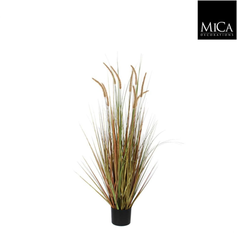 Mica Decorations pluimgras dogtail maat in cm: 120 in plastic pot