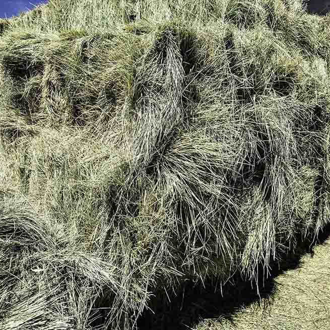 Is Bermuda Hay Good for Horses?