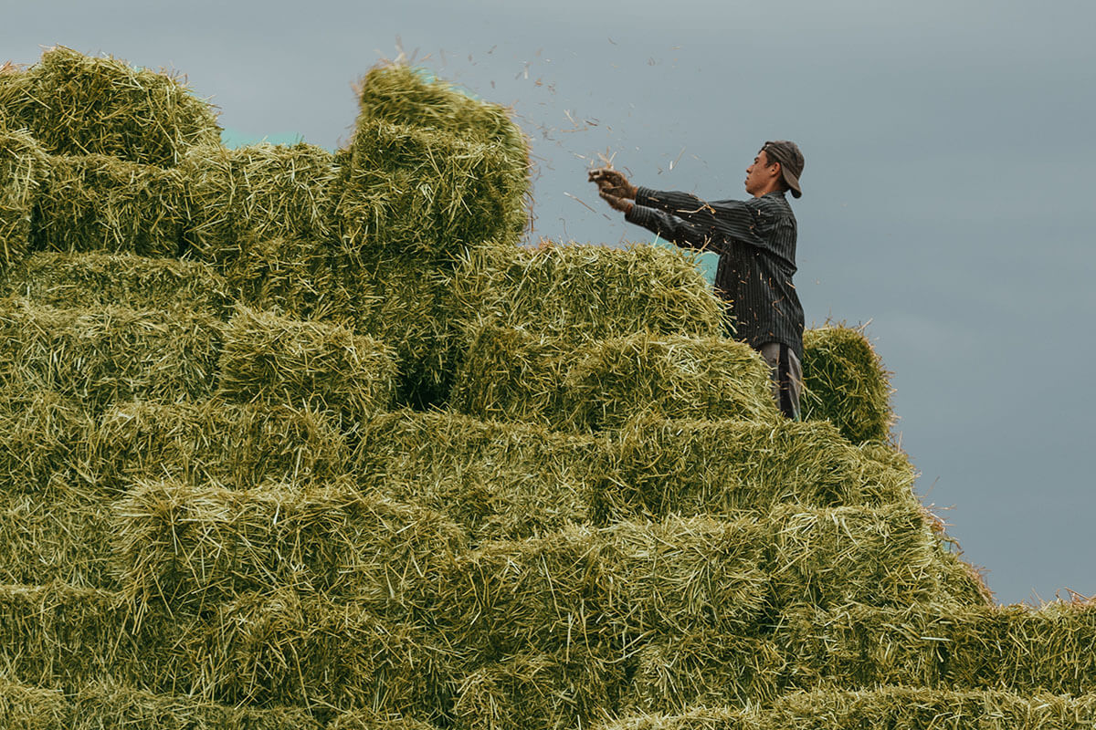 How Much Does a Bale of Hay Weigh?   Conway Feed & Supply