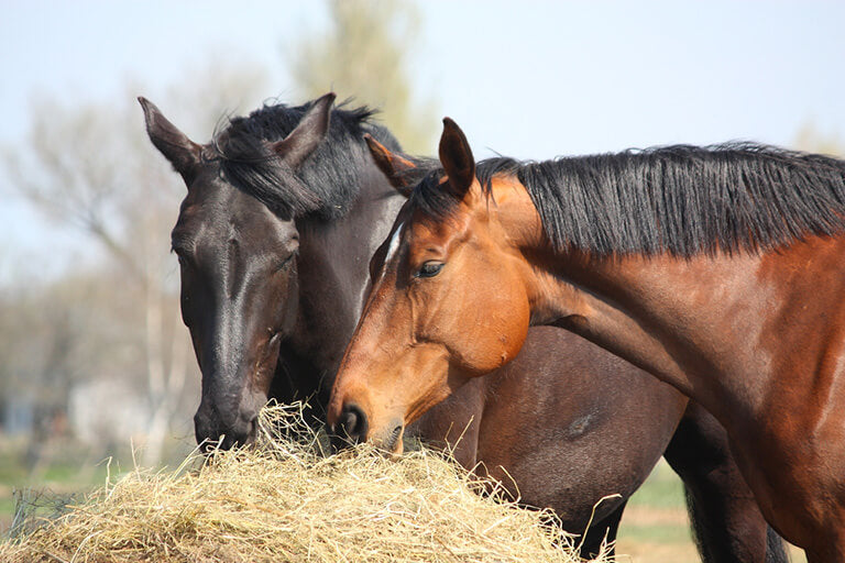 Should Horses Have Constant Access to Hay?
