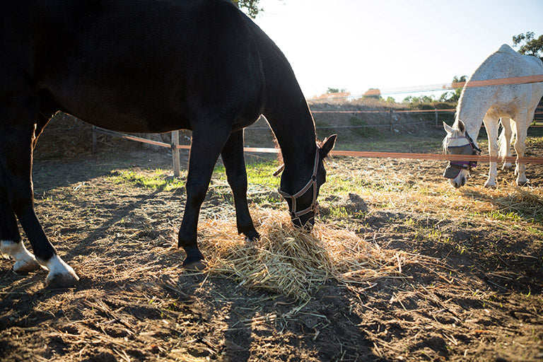 Should Horses Have Hay All the Time?
