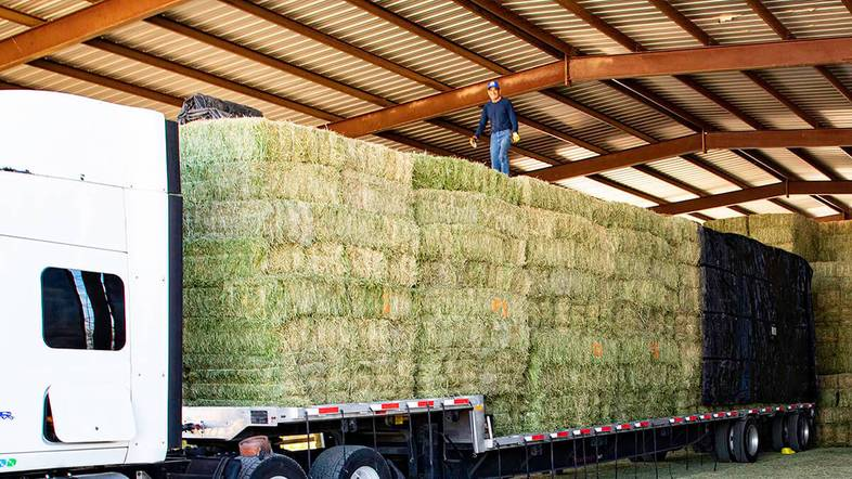 Why Arizona Alfalfa Hay Is Best for Delivery