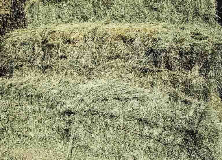 Evaluating the nutritional needs of your horses is important when you are choosing hay
