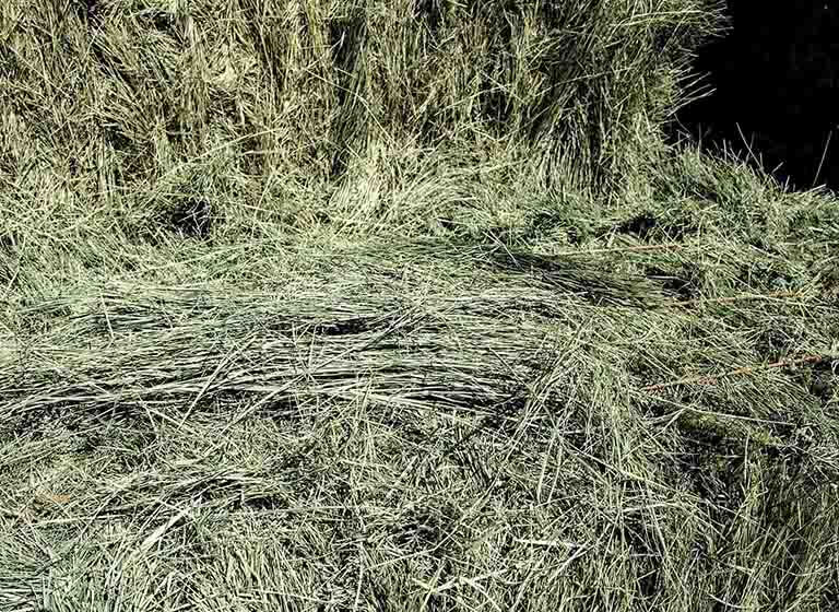 Is Bermuda the best choice of grass hay for your horses?