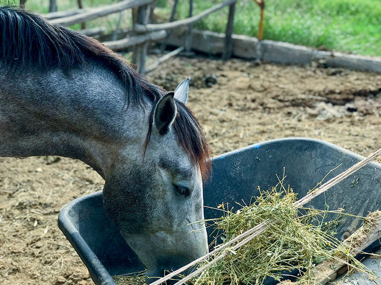 How can you provide the best nutrition to your horses?