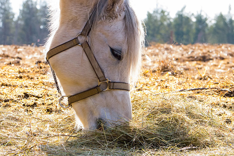 It is OK to give your horses hay all the time, but also think about supplements