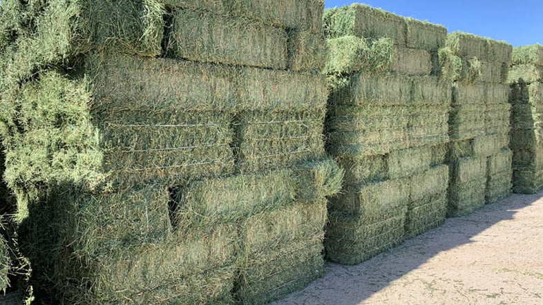 Using alfalfa can give your horses more calories and nutrients in the feed
