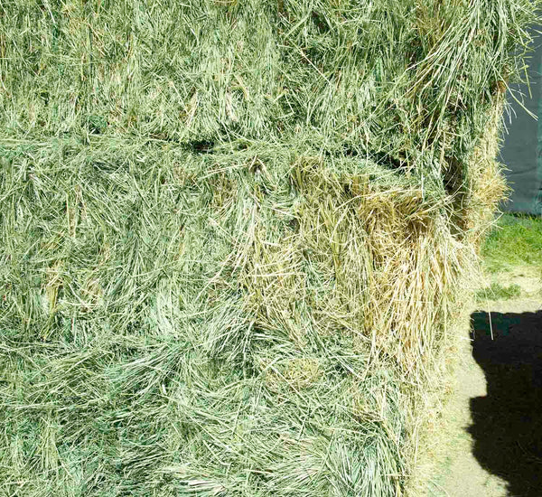 Teff Grass Hay For Sale #2-Conway Feed