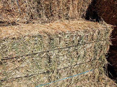 Alfalfa Hay for sale #3.