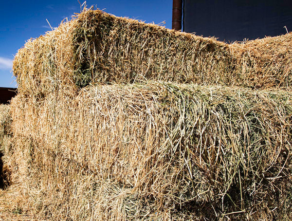 Alfalfa Hay for sale #3-Conway Feed